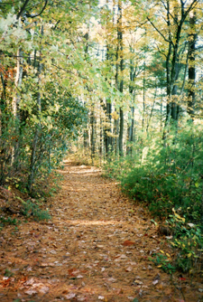 Forest Path - Photo by Susan Gregg-Schroeder